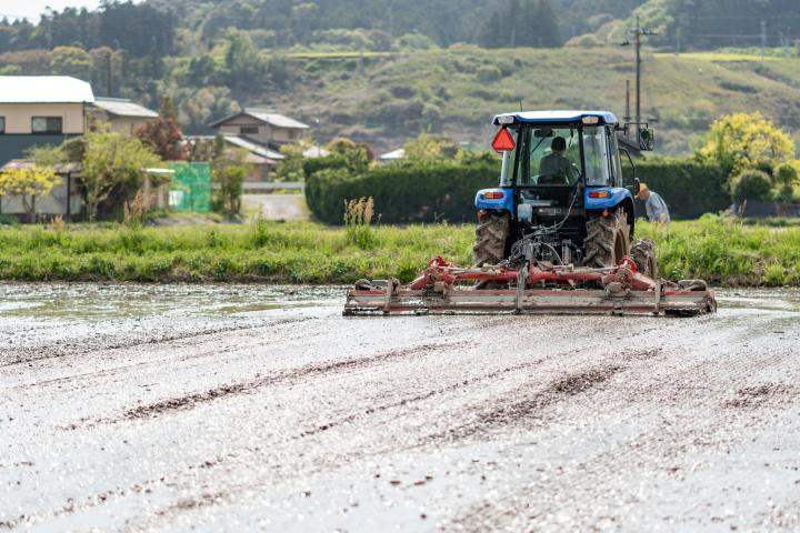代搔き作業中の田んぼです